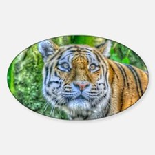 Tiger,Painting Decal