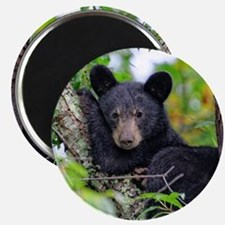 Baby Black Bear Magnets