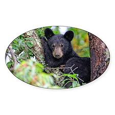 Baby Black Bear Decal