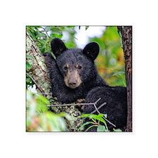 Baby Black Bear Sticker