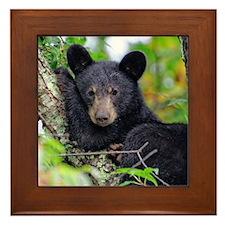 Baby Black Bear Framed Tile