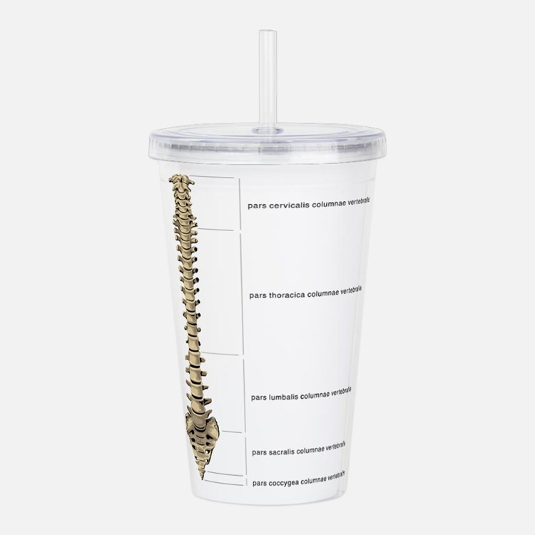 Cute Med student Acrylic Double-wall Tumbler