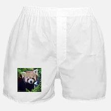 Red Panda Boxer Shorts