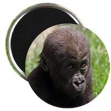 Gorilla-Baby002 Magnets