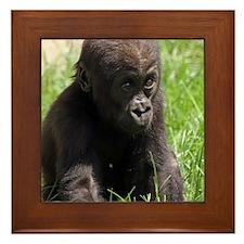 Gorilla-Baby002 Framed Tile