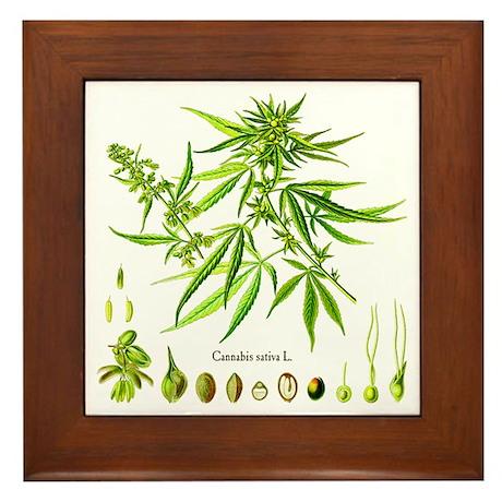 Cannabis Sativa L. Framed Tile