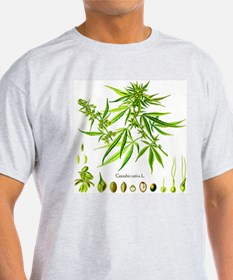 Cannabis Sativa L. T-Shirt