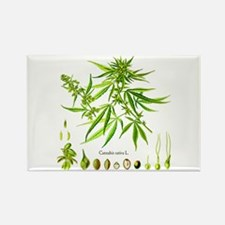 Cannabis Sativa L. Rectangle Magnet