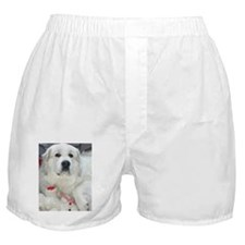 great pyrenees with teddy bear Boxer Shorts