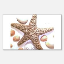 seashells Decal