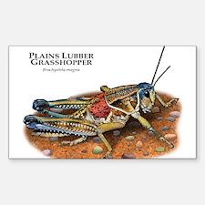 Plains Lubber Grasshopper Decal