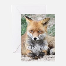 Fox002 Greeting Cards