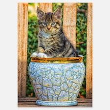 Pot Of Baby Kitten 5x7 Flat Cards