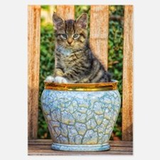 Pot Of Baby Kitten Invitations