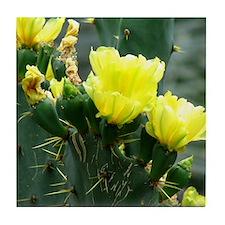 Yellow cactus blossoms coaster