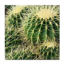 Barrel cactus coaster