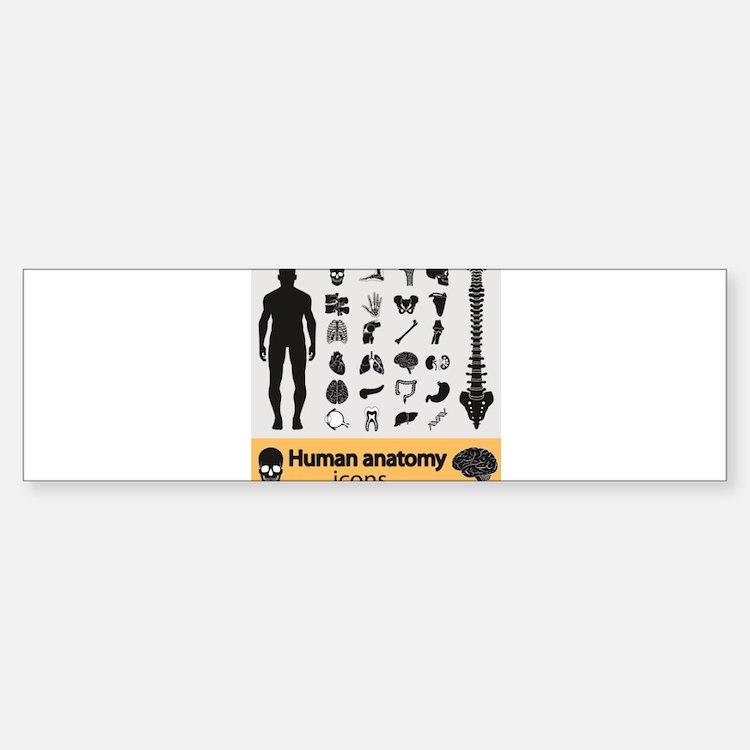 Human Anatomy Bumper Bumper Bumper Sticker