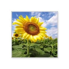 Sunflower Garden Sticker