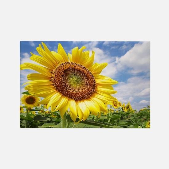 Sunflower Garden Magnets