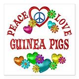 Guinea pigs Car Magnets