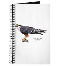 Aplomado Falcon Journal