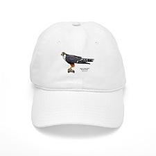 Aplomado Falcon Baseball Cap