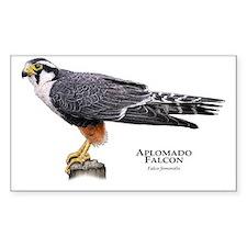 Aplomado Falcon Decal