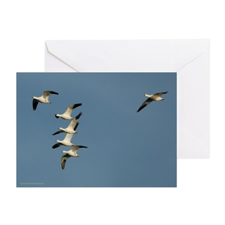 Snow Geese Greeting Cards (Pk of 10)
