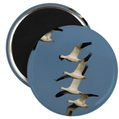 """Snow Geese 2.25"""" Magnet (10 pack)"""