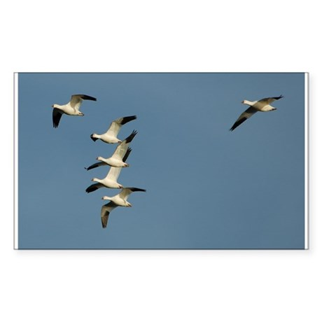 Snow Geese Rectangle Sticker