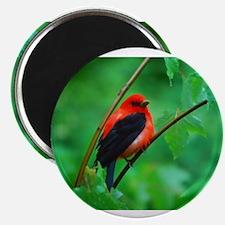 Cute Birds Magnet