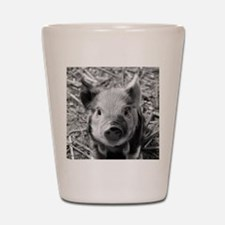 Sweet Piglet,black white Shot Glass