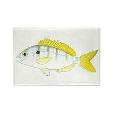 Pinfish Magnets