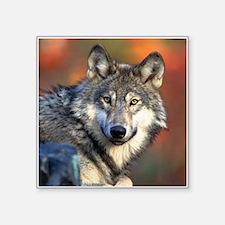 Wolf Photograph Sticker