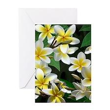 Plumeria Flowers Greeting Cards