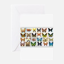 Bitterflies no text Greeting Cards