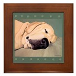 Yellow Labrador Dog Sleeps Framed Tile