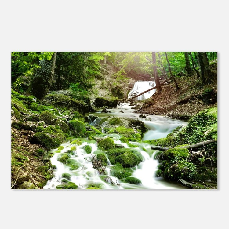Woodland Stream Postcards (Package of 8)
