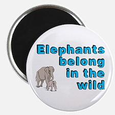 Elephants belong in the wild - Magnet