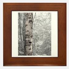 Birch Tree In Forest Framed Tile