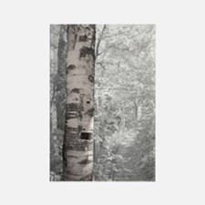 Birch Tree In Forest Magnets