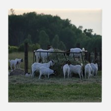 Goats in a Field Tile Coaster