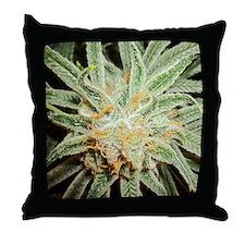 Cannabis Sativa Bud Throw Pillow