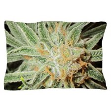 Cannabis Sativa Bud Pillow Case