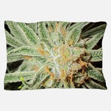 Cannabis Sativa Flower Pillow Case
