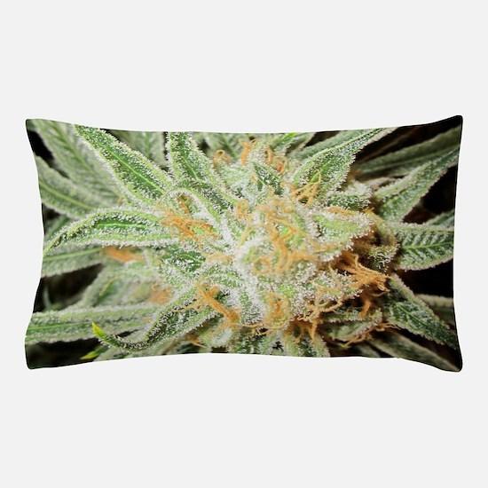 Cannabis Sativa Flower Pillow Case