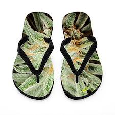 Cannabis Sativa Bud Flip Flops