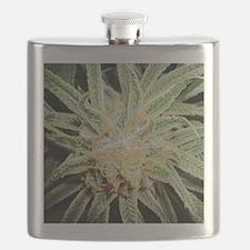 Cannabis Sativa Flower Flask