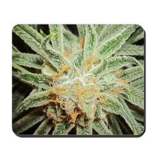 Cannabis Sativa Bud Mousepad