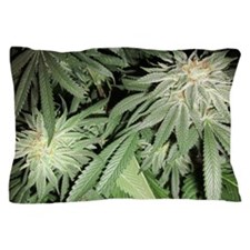 Cannabis Kush Plant Pillow Case
